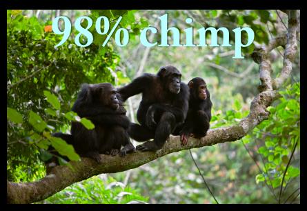 98% chimp.png