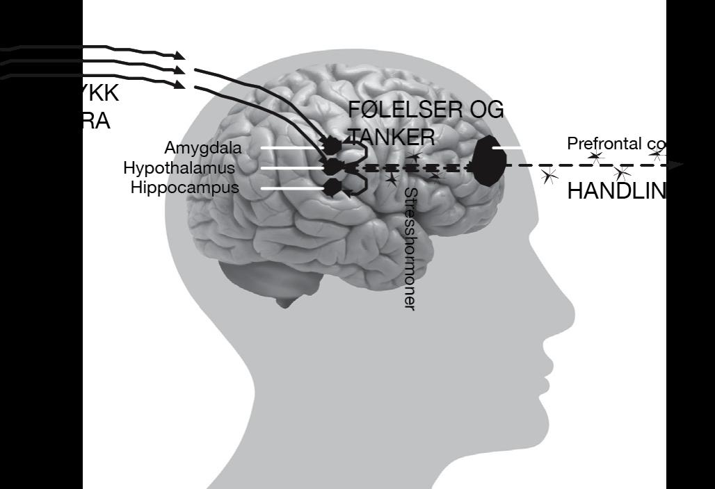 Hjernen under stress
